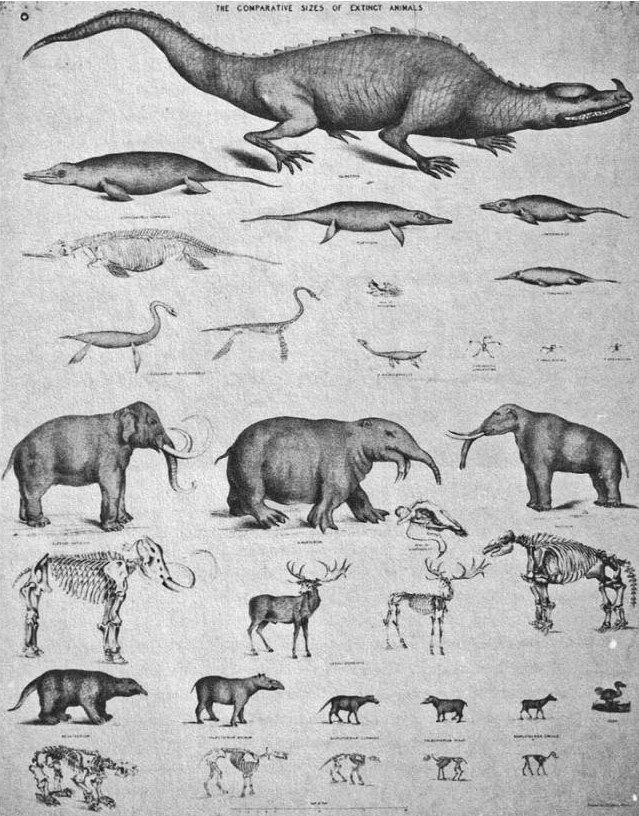 The comparative sizes of extinct animals\