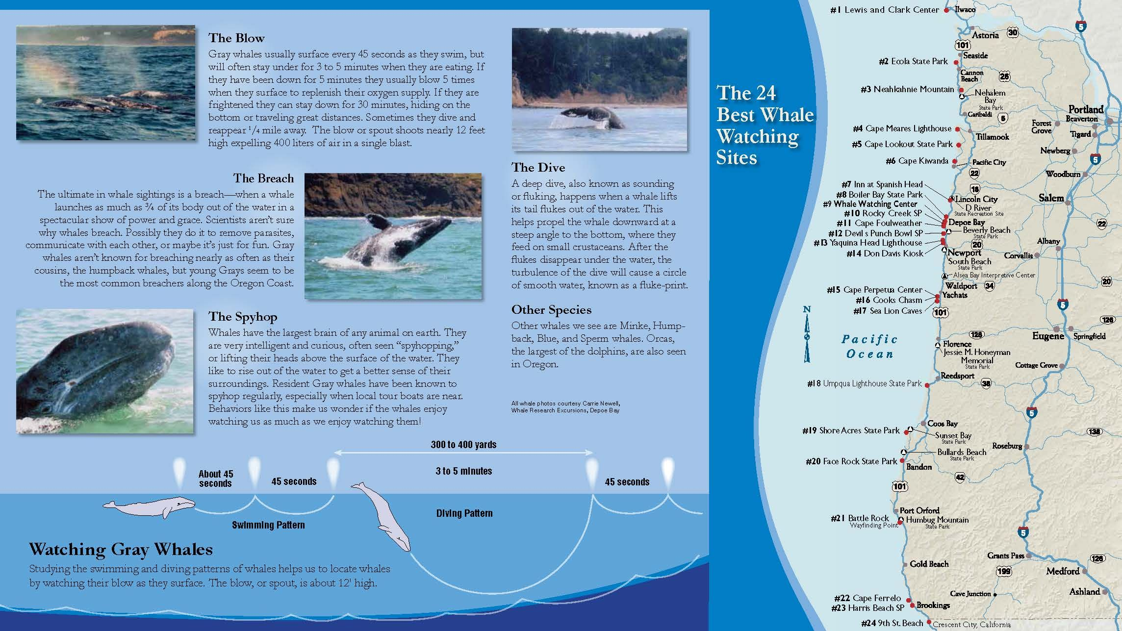 Whale Watching Center, Depoe Bay, by the Oregon Parks and