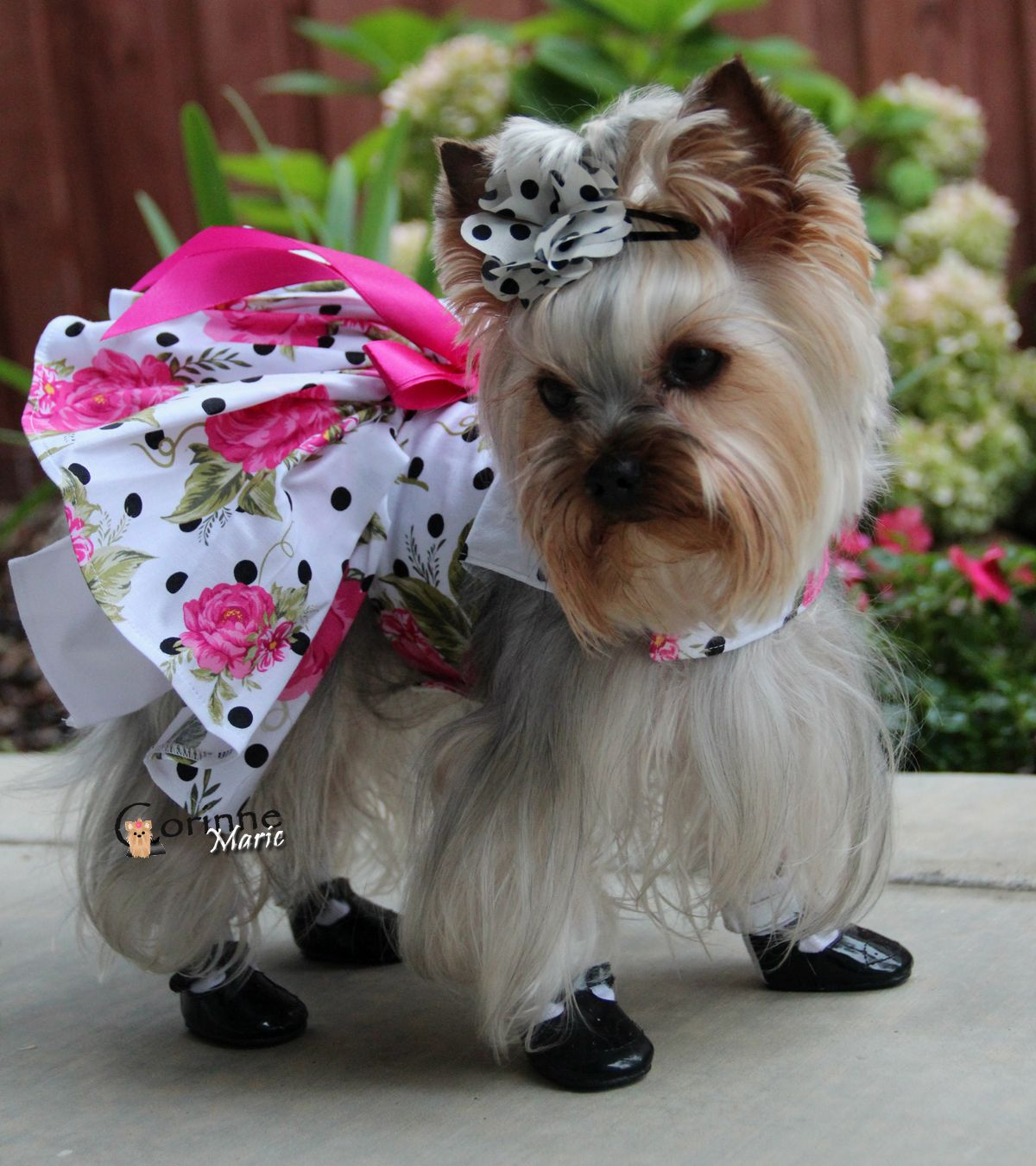 Hot Pink Roses Dress Yorkies Pinterest Yorkie Dogs And Dog
