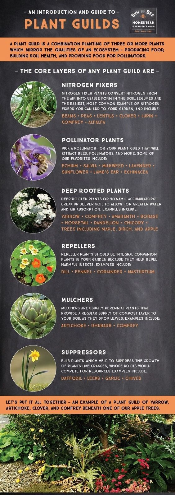 Food Forests & Plant Guilds in Permaculture Design is part of Food forest garden, Permaculture gardening, Plants, Forest garden, Pollinator plants, Forest plants - Plant guilds are an important aspect of permaculture design  Food forest garden design examples, plant guild examples & the 7 layer food forest