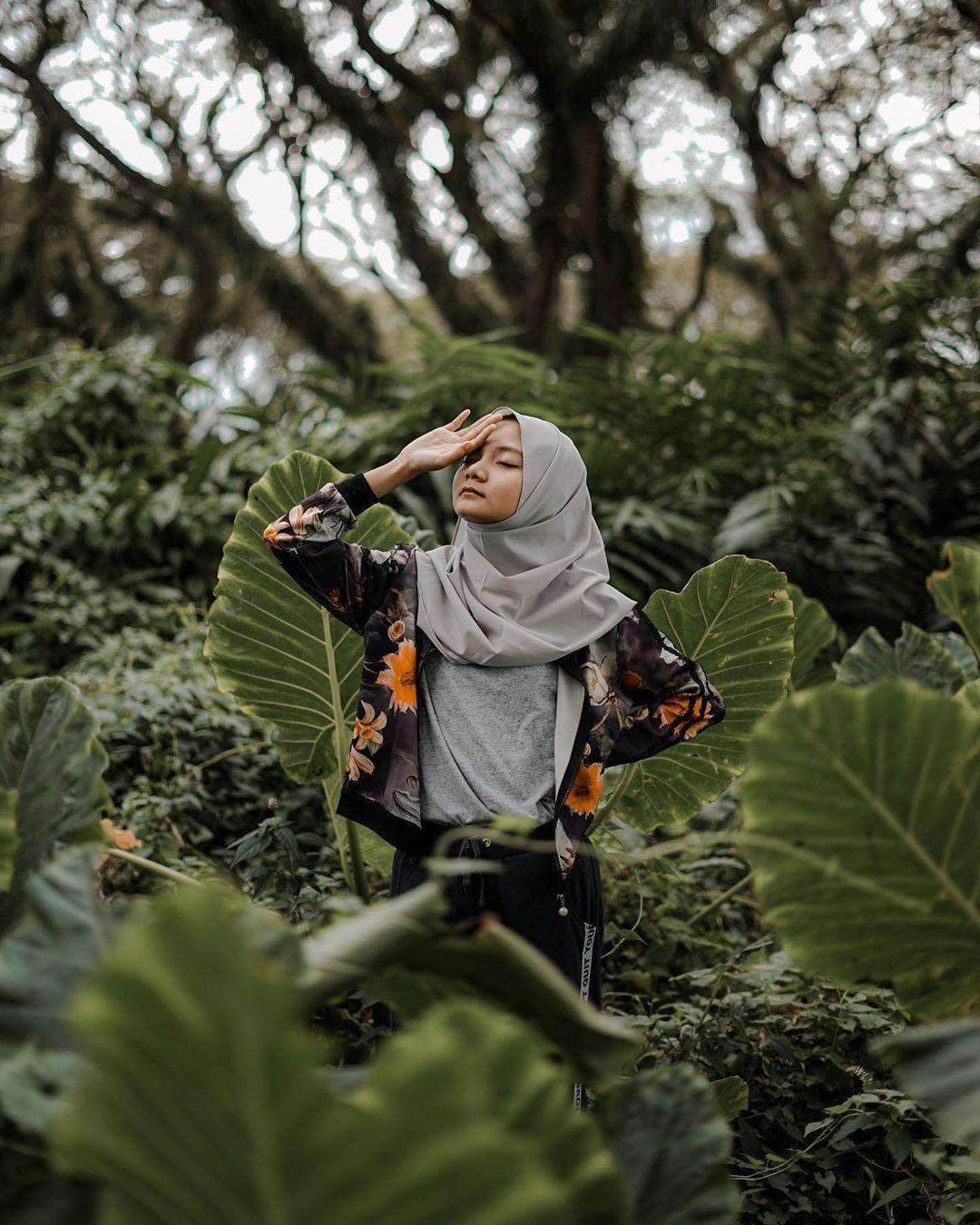 Djwatan Batang Pohon Hutan Tumbuhan Paku