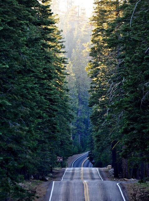 Road less traveled: Olympic National Park.