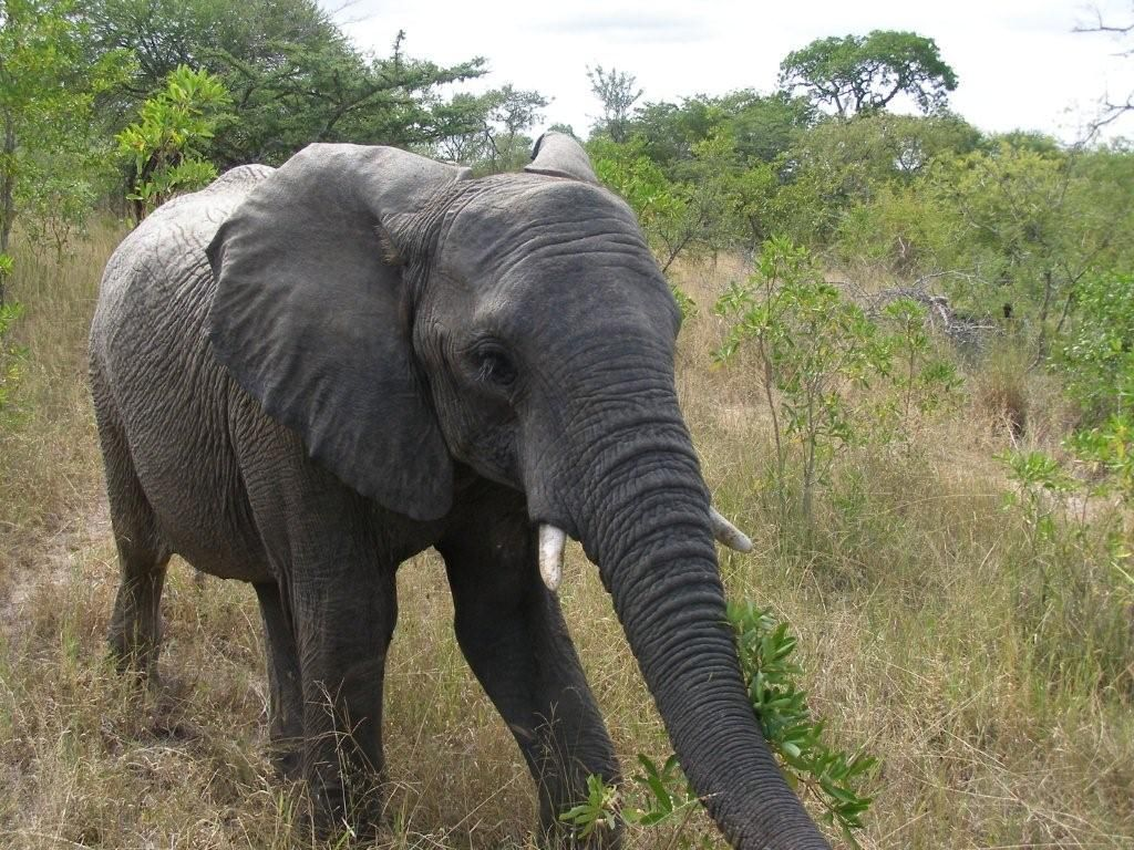 Beautiful Ele Baby From Simbambili Safari2africa African Wildlife Elephant Animals