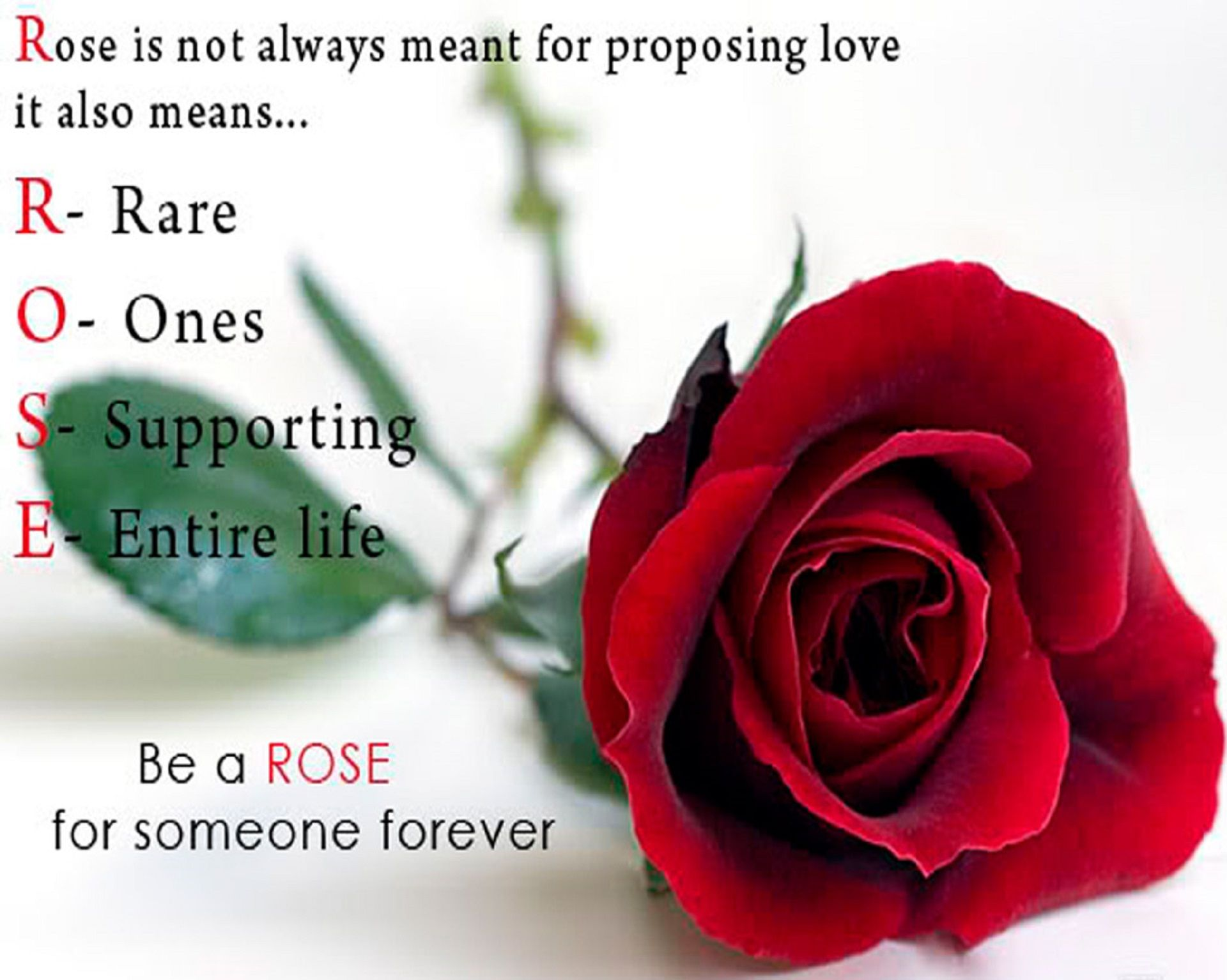 Happy Rose Day Quotes Hd Wallpaper Happy Rose Day Wallpaper