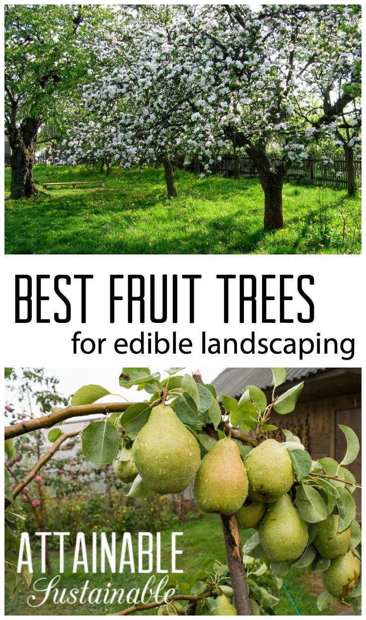 Fruit Trees For The Urban Garden Or Homestead Edible Landscaping Small Es