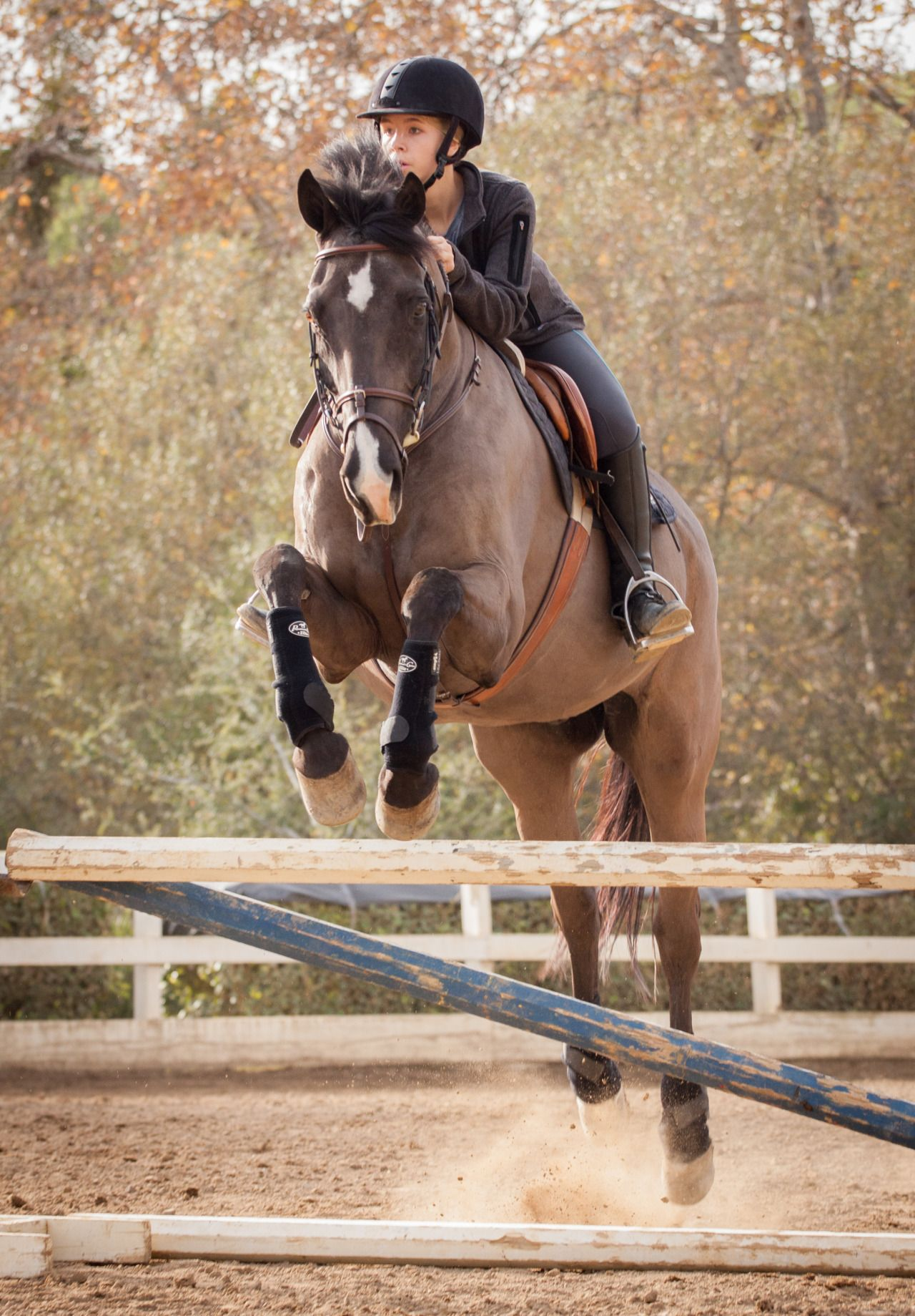Volcano And I Are Going To The Show In Two Weeks Anyone Else Photographie Equine Saut D Obstacles Photographie Equestre