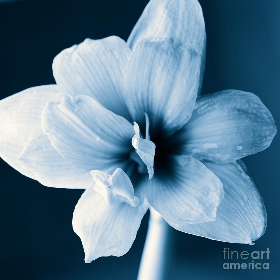 Black and white pictures with blue biased view of blue black and white pictures with blue dhlflorist Image collections