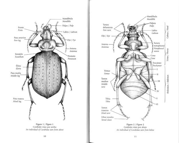 Pin By Macey Erice On Giftswants Beetle Bugs Anatomy