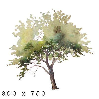 Texture Png Watercolor Elements Plants Landscape Sketch Landscape Drawings Tree Drawing