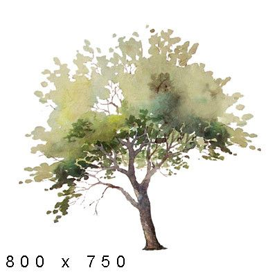 Texture Png Watercolor Elements Plants Landscape Sketch