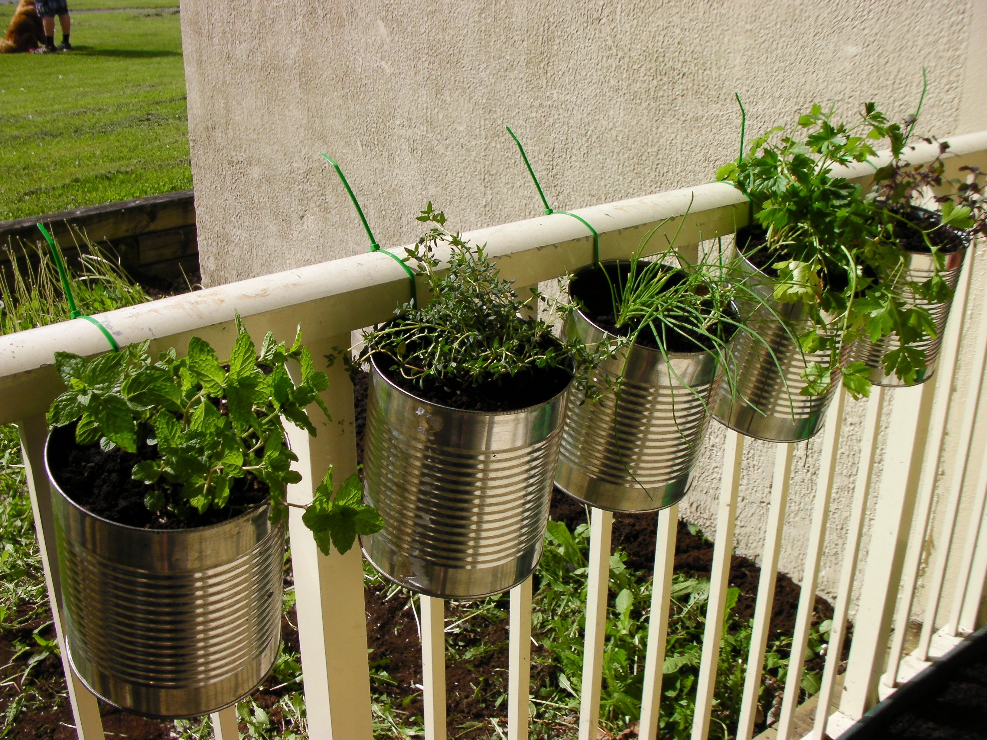 Herbs In Coffee Cans, Could Use Soup Cans Or Mason