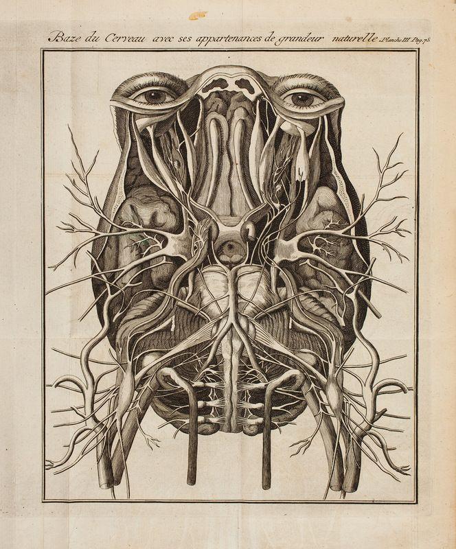 by Lecatt, late 1700s | Anatomy | Pinterest | Cranial nerves, Brain ...