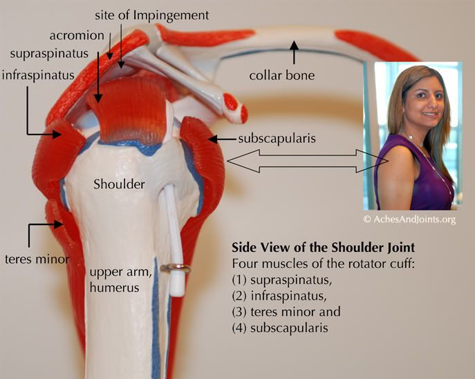Rotator Cuff Anatomy | shoulder | Pinterest | Rotator cuff and Muscles