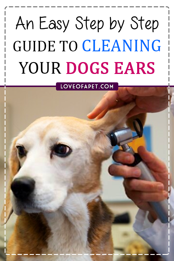 How To Clean Dog S Ears At Home 5 Steps Love Of A Pet In 2020 Dog Health Tips Dog Cleaning Pet Remedies