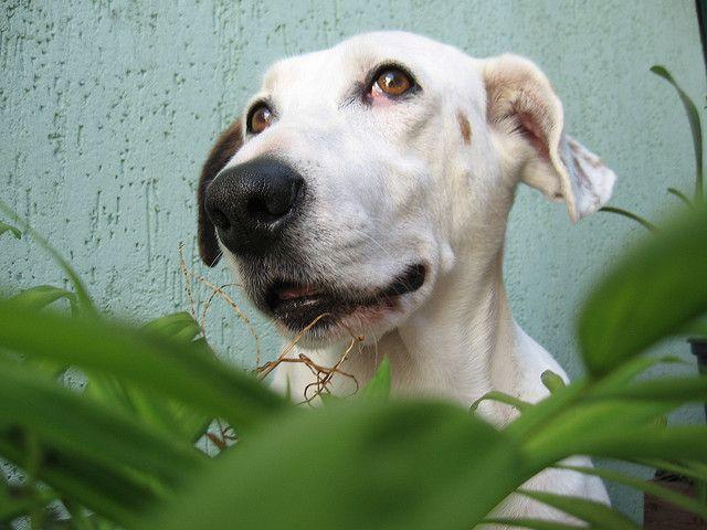 Dog Friendly Outdoor Plants Home Depot Blog