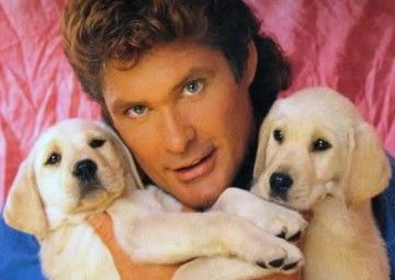 The Hoff With Puppies Nikki Would Love This Cuccioli Attore
