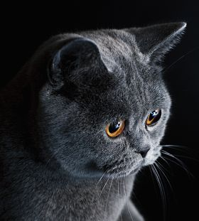 Do Cats Sleep With One Eye Open