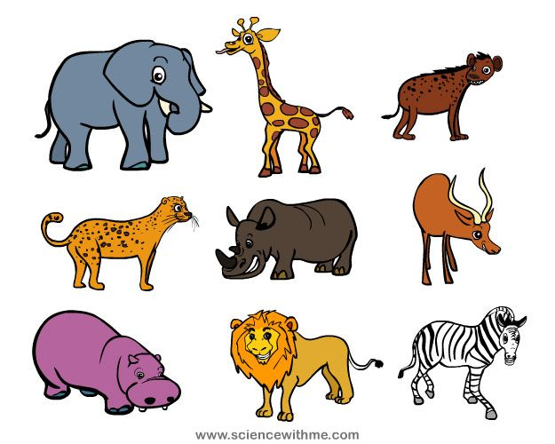 learn about safari animals - Pictures Of Animals For Kids