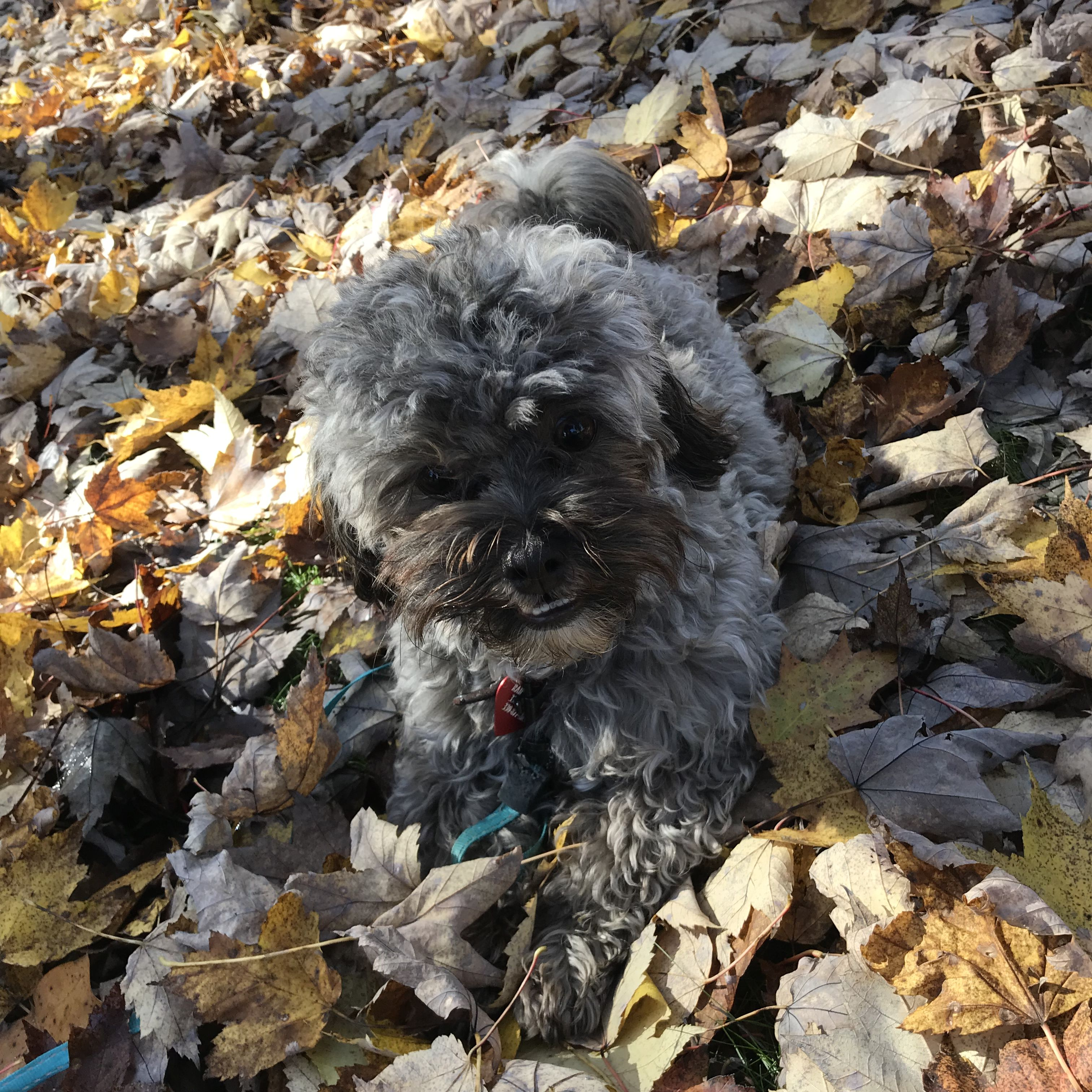 Cutest Puppy Playing In The Leaves