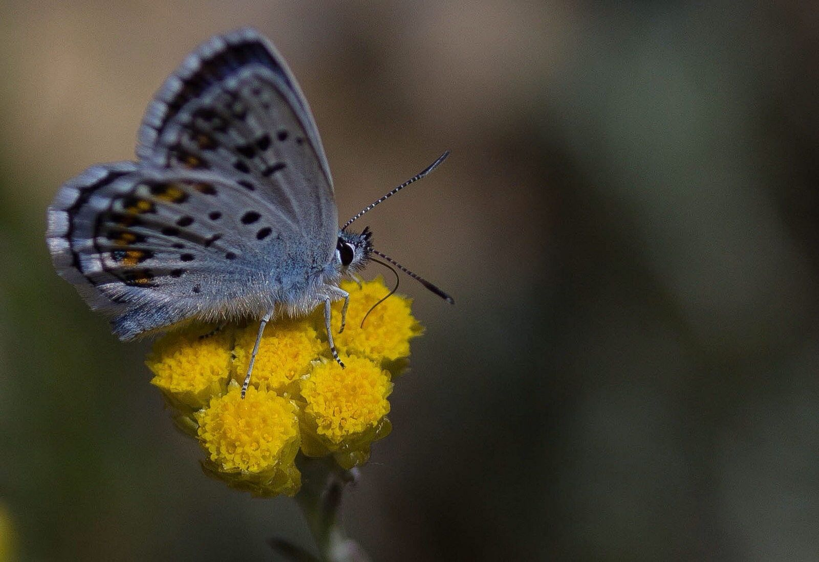 Butterfly by Robert Padovani on 500px