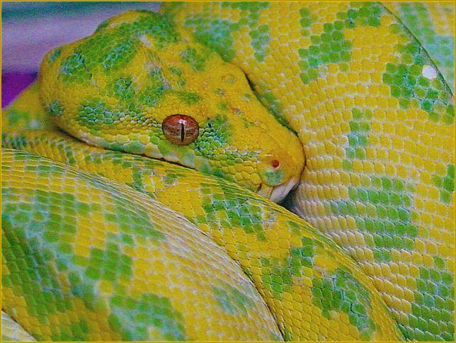Yapen » Blog Archive » FN Reptiles