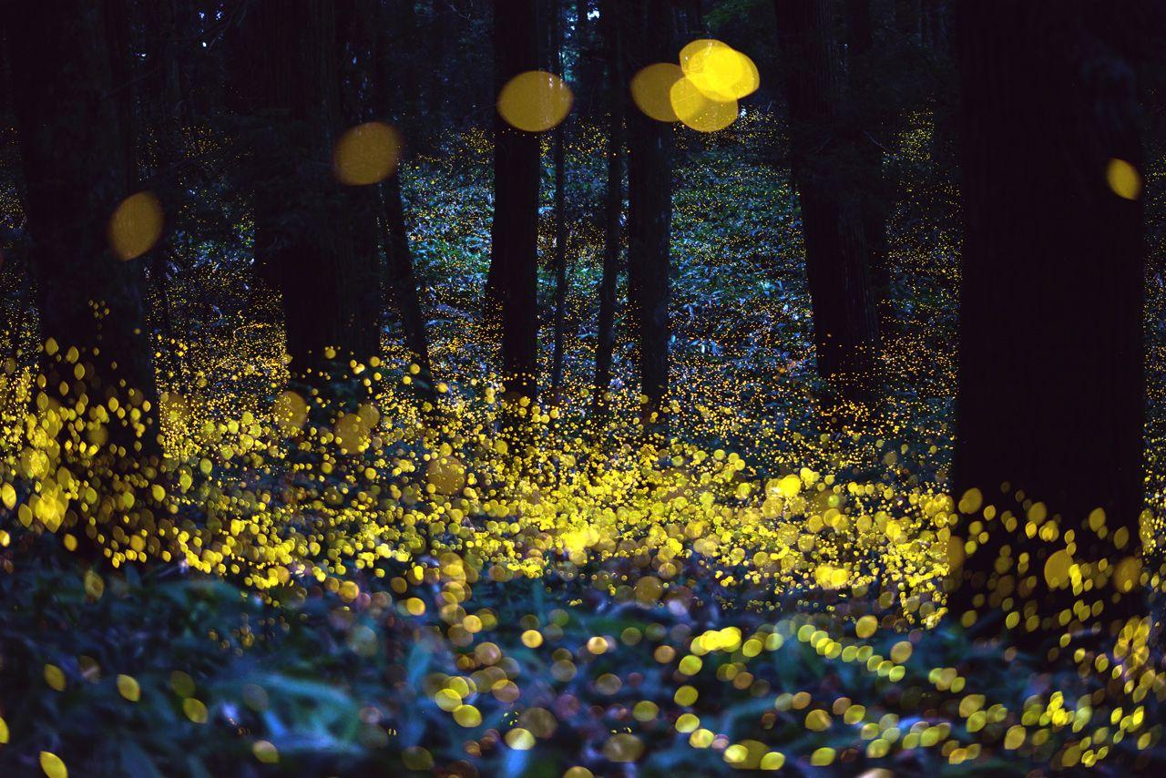 via Tsuneaki Hiramatsu http://digitalphoto.cocolog-nifty.com