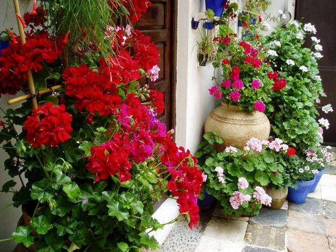 flores de outono para jardim - Pesquisa Google