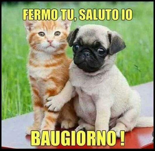Animali buongiorno buona notte cani gatti pinterest for Immagini divertenti di buongiorno per whatsapp
