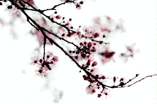 Pin On Pretty Petals