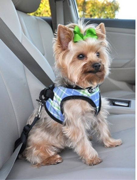 Dog Walking Harness Best Pet Teacup Yorkie Chihuahua And Leash Choke Free No Mesh Sports Doggy