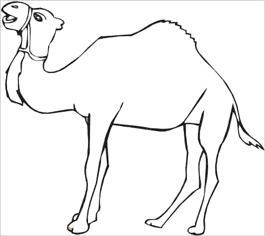 Dromedary Camel Coloring Pages | ZOO | Pinterest | Camels
