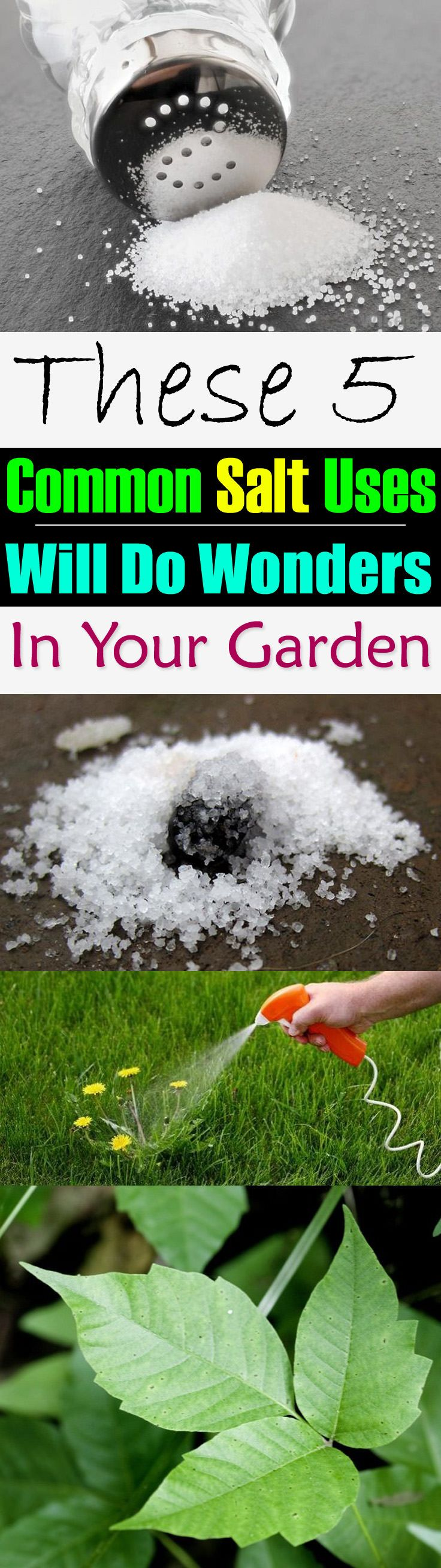 These 5 Common Salt Uses Will Do Wonders In Your Garden