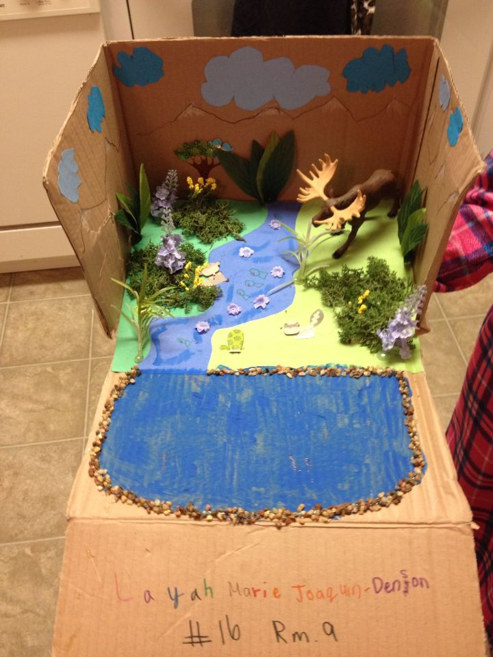 Wetland biome.. School project | Crafts for lays school project ...