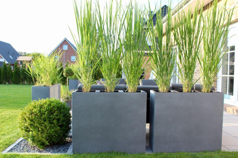 Sichtschutz mit großen Beton-Pflanzkübeln