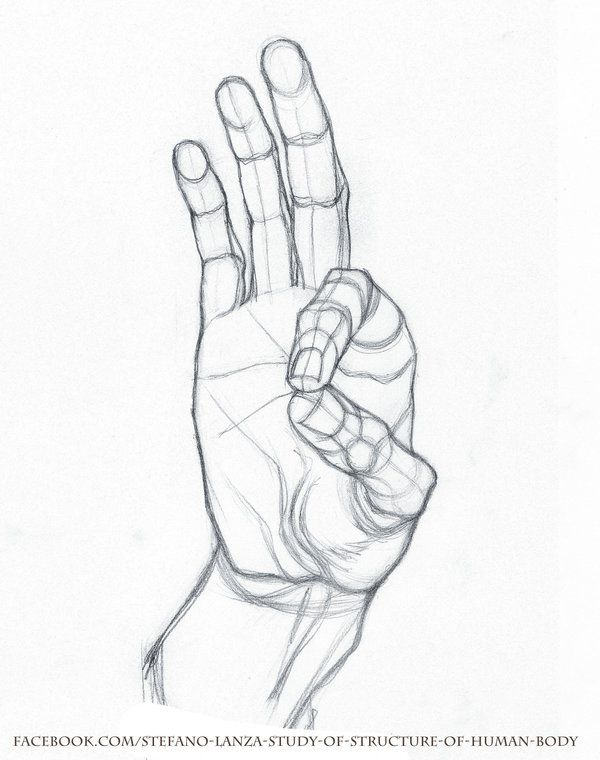 Study by StefanoLanza | Human hand references | Pinterest | Human ...