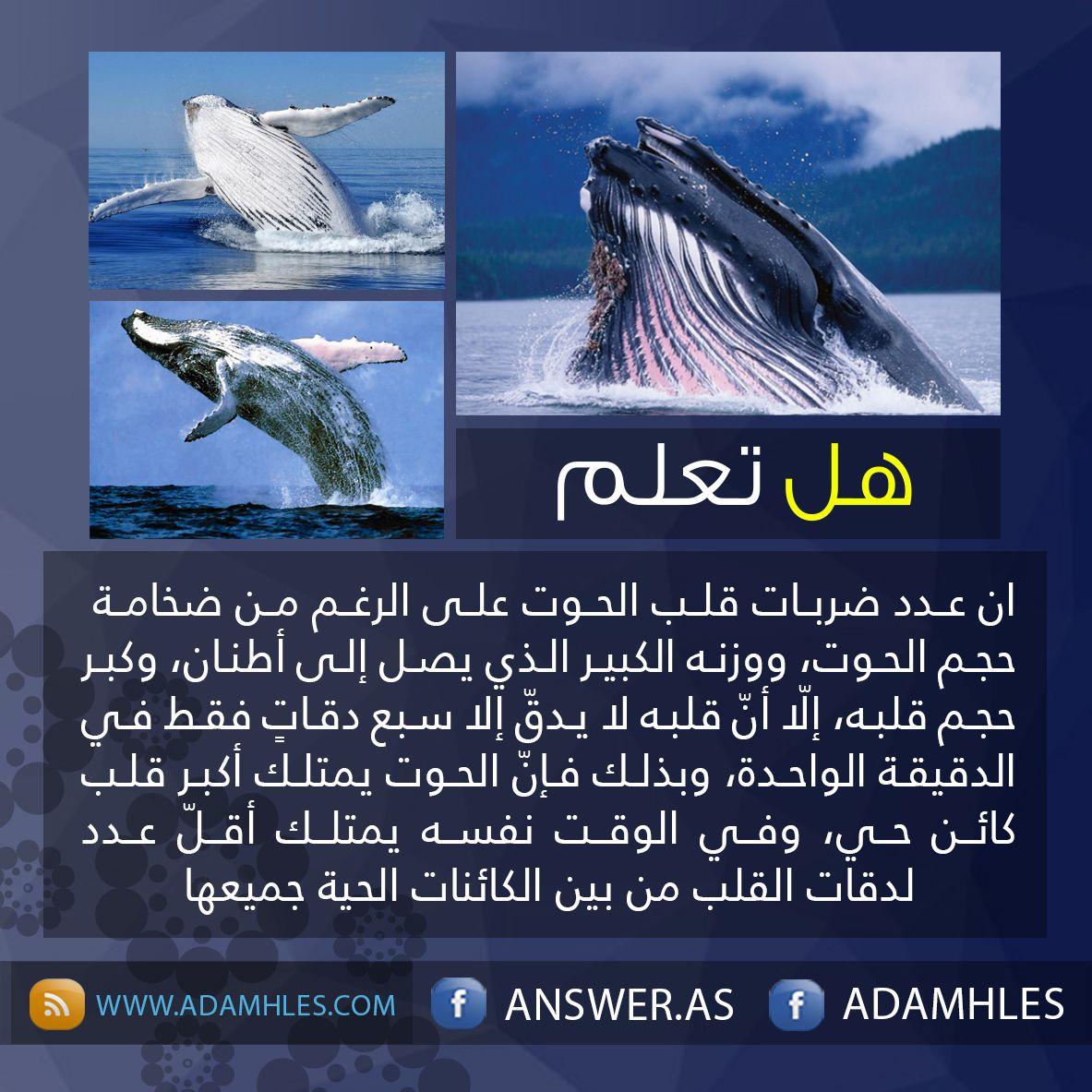معلومه History Of Islam Arabic Words Words