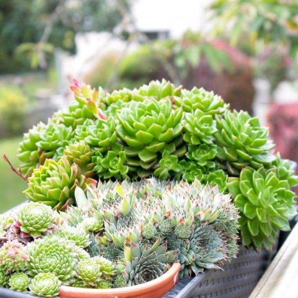 Jardiniere Epinettes A Retrouver Sur Www Fleurenville Com Avec