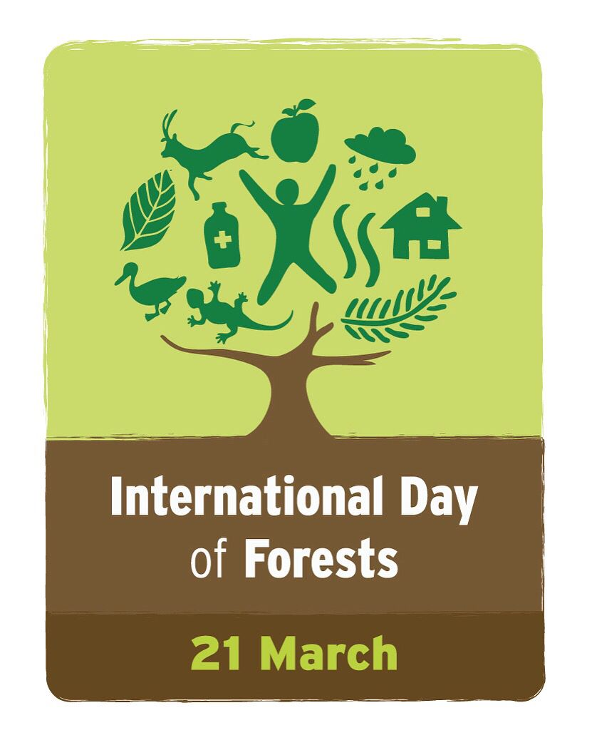 This site contains affiliate links from which we receive a compensation (like amazon for example). International Day Of Forests International Day Forest World