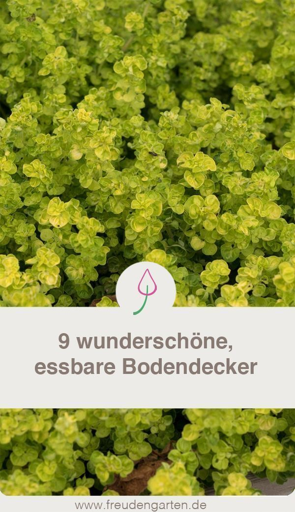 Neun essbare Bodendecker #apartmentbalconygarden