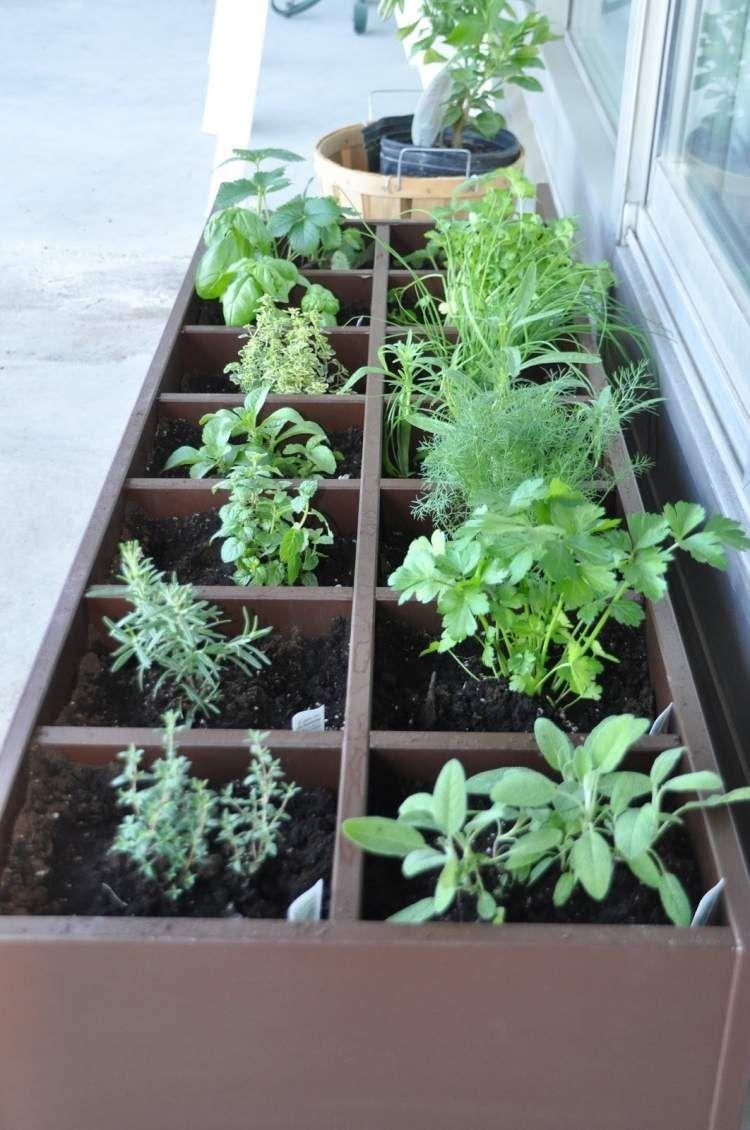 mini-kräutergarten am balkon oder an der fensterbank in kleiner, Gartengerate ideen