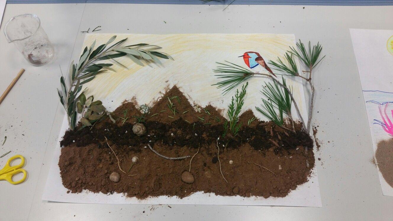 Ecosistema mediterraneo