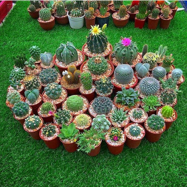 218 Likes, 12 Comments - Happy Gardens 😀 (@thehappygardens) on ...