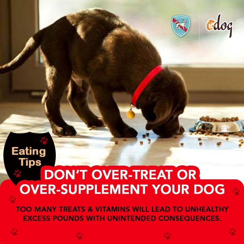 Get To Know Everything To Keep Your Dog Fit Download The App For