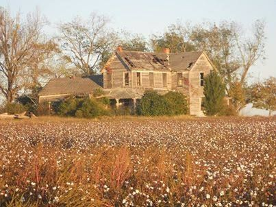 Old house in the middle of tobacco field near Hawkinsville