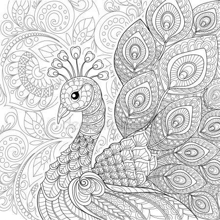 Zentangle Tarzinda Peacock Adult Coloring Pages Boyama Sayfalari Mandala Boyama Sayfalari