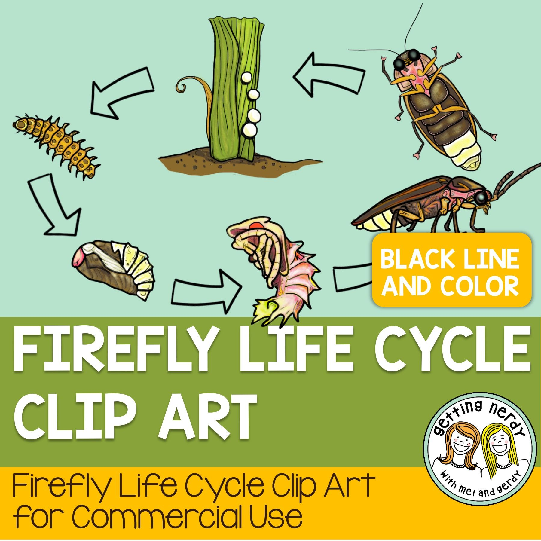 Firefly Life Cycle | Life cycles, Teaching science ...