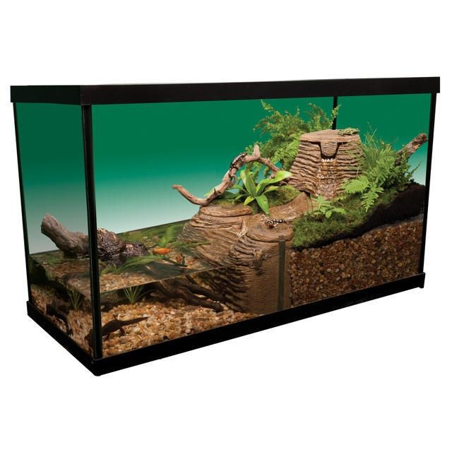Image Result For Turtle Terrarium Ideas Turtle