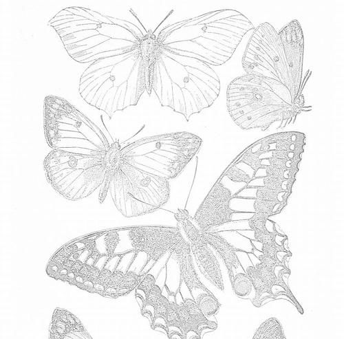 Printable Butterflies in Four Color Schemes | Adult coloring ...