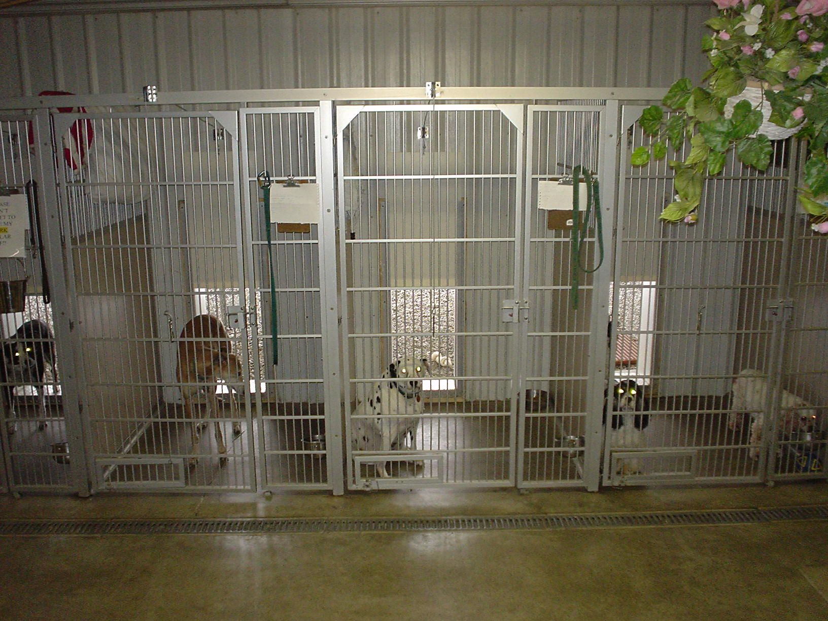 Wine Country Pet Resort Dog Kennels