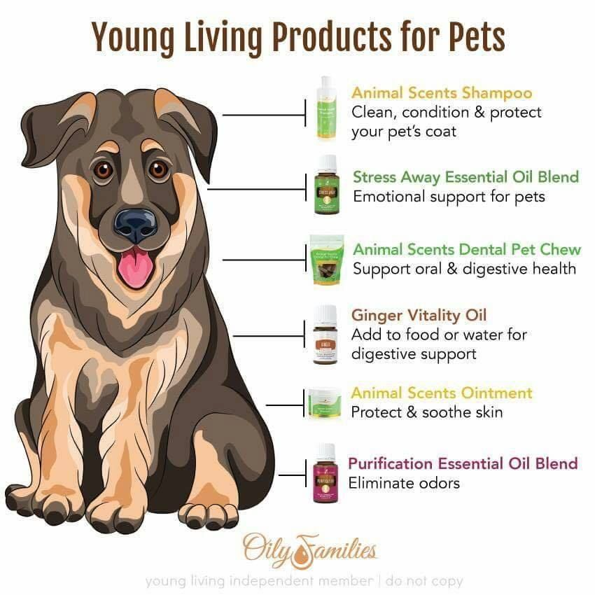 young living is just essential oils here s a small list of products that pets can use animal scents shampoo stress away essential oil blend